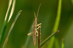 k.A.... Käfer im Gras...