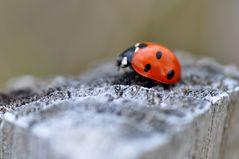 ...käfer #1