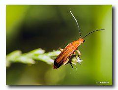 Käfer #2