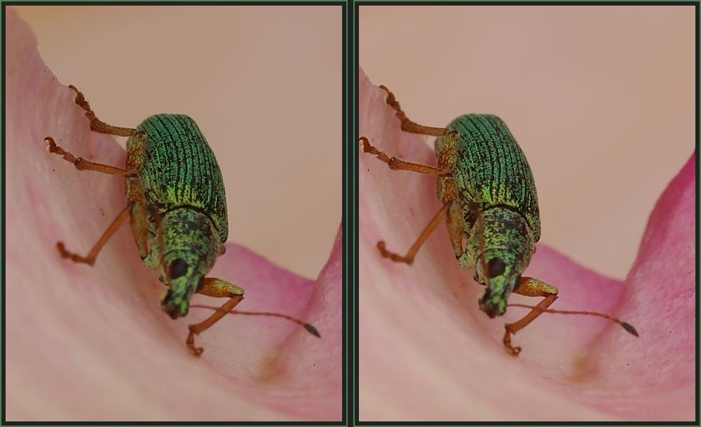 Käfer [3D]