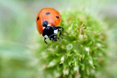 ...käfer #5