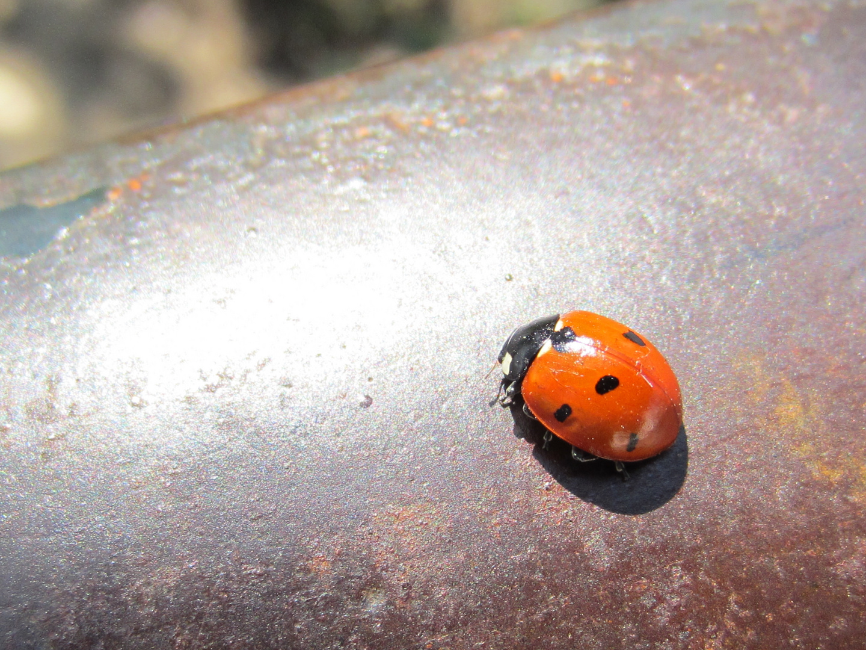 Käfer auf der Lauer