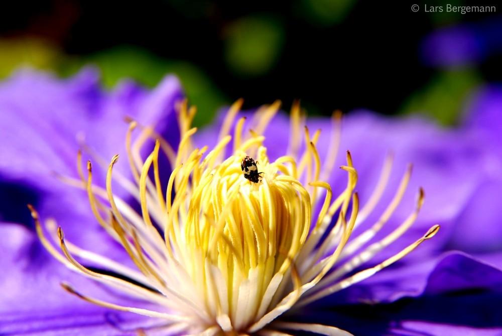 Käfer auf Entdeckungstour
