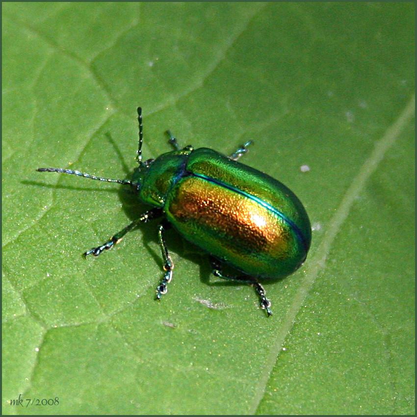 k fer auf gr n foto bild tiere wildlife insekten bilder auf fotocommunity. Black Bedroom Furniture Sets. Home Design Ideas