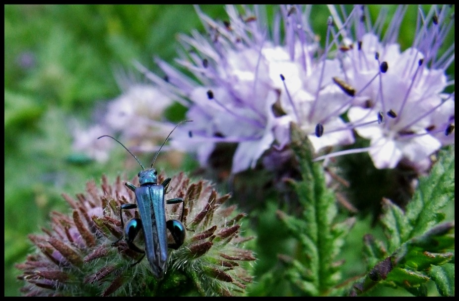 Käfer, Baujahr 2007, grünblaumetallic