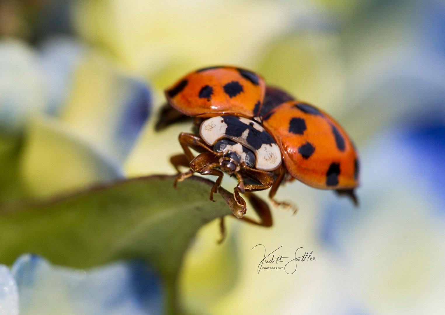 Käfer bei Start
