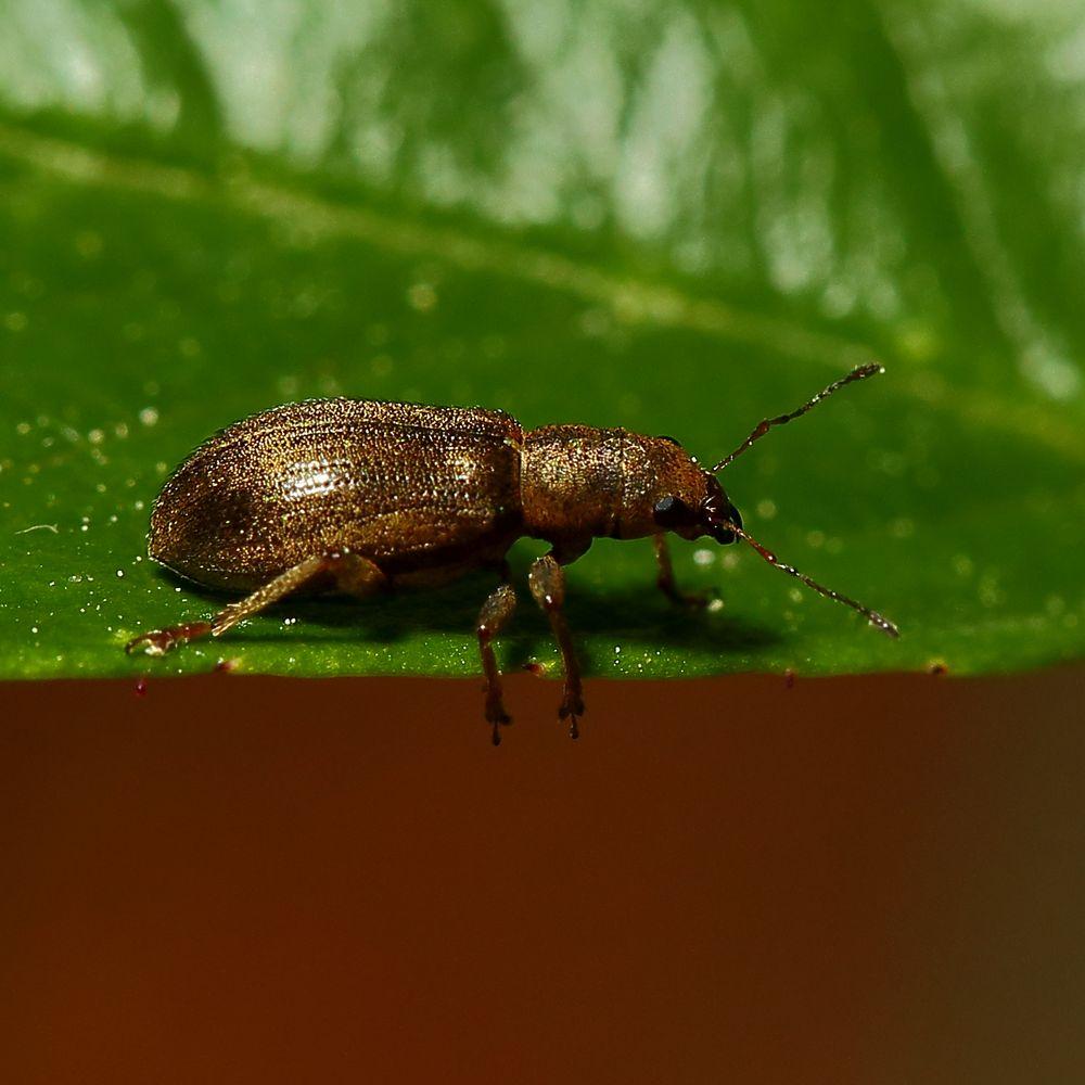 Käfer (I)