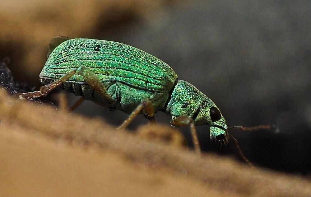 Käfer II