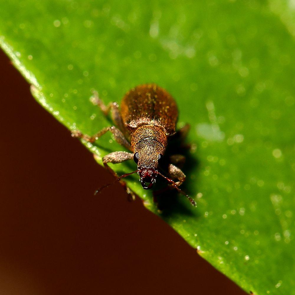 Käfer (II)