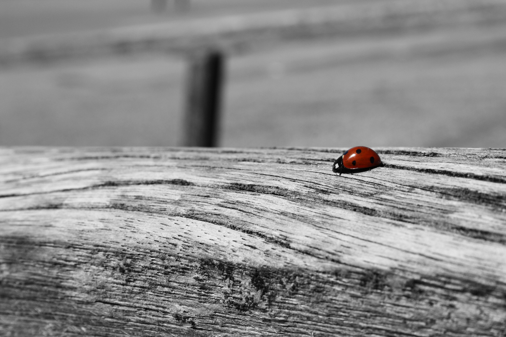 Käfer im Mai
