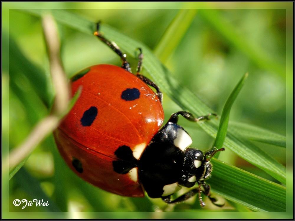 käfer im regen