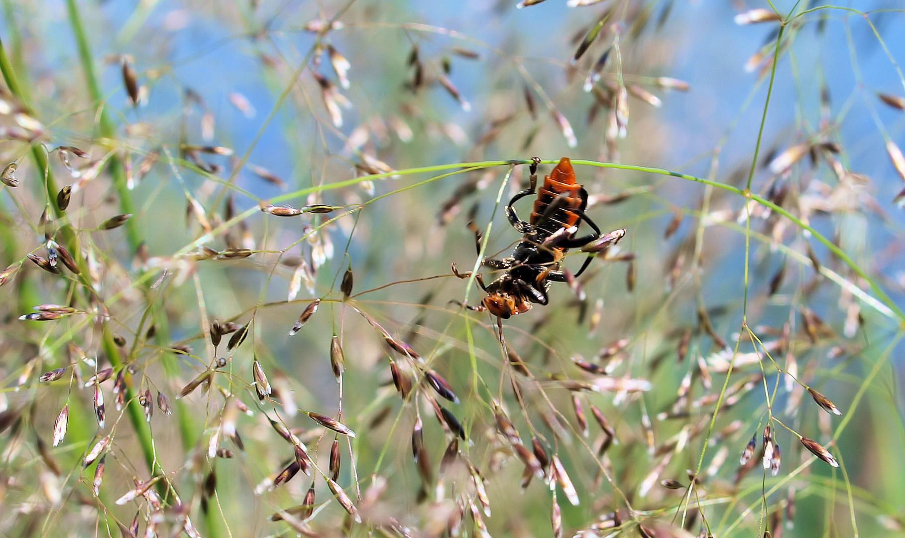 Käfer im Stress....