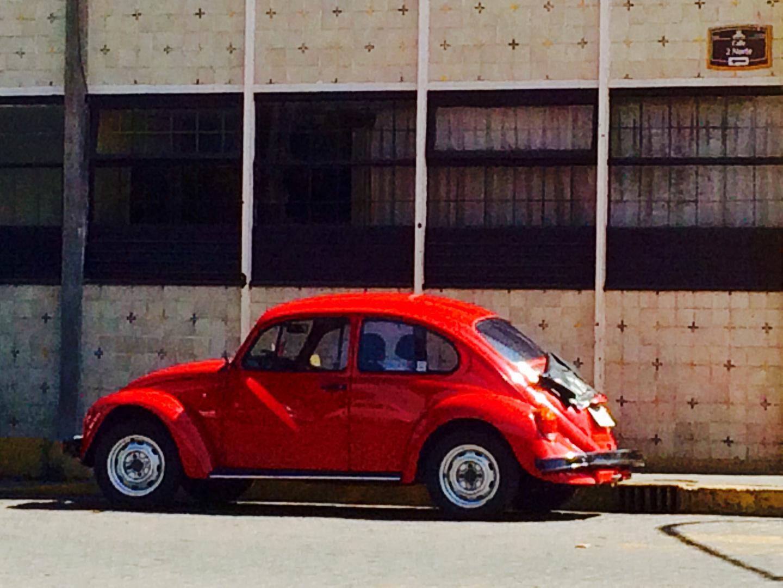 Käfer in leuchtendem rot.