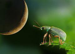 Käfer-Romatik