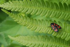 Käfer - wer kennt den Namen?