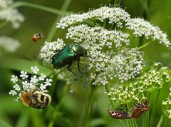 Käfereien