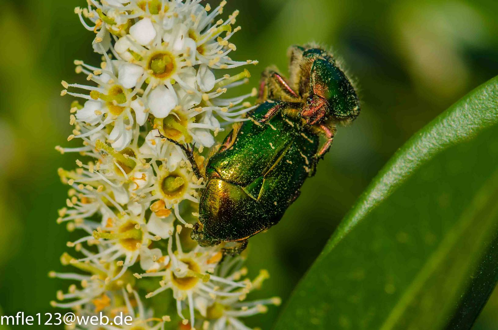 Käferliebe