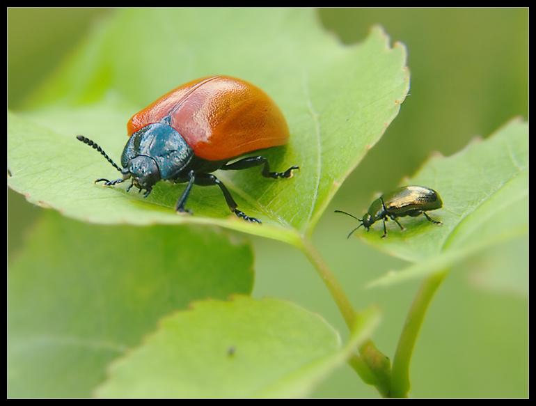 ???...Käfermeeting mit Himmelsspiegelung