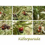 Käferparade