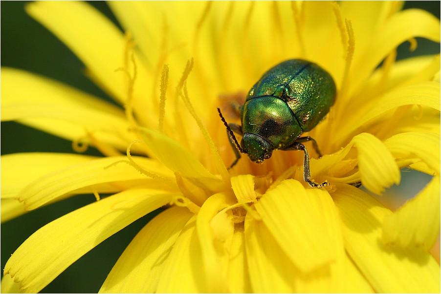Käferparadies
