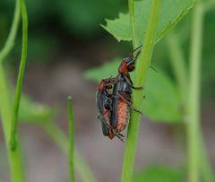 Käferstündchen