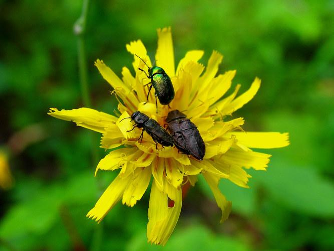Käfertreffen