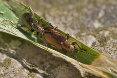 Käfertreffen I