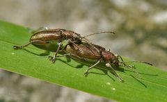 Käfertreffen II