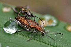 Käfertreffen III