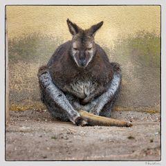 Känguru als Bettler ??  ;o))