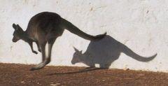"""Känguru """"auf der Flucht"""" III"""