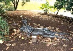Känguru - mal anders