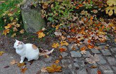 Kätzchen im Herbst
