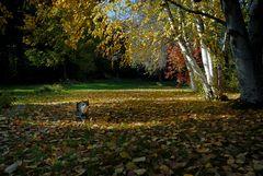 Kätzchen im Herbstlaub