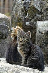 Kätzchen in Kromlau