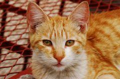 Kätzchen in Marrakesch