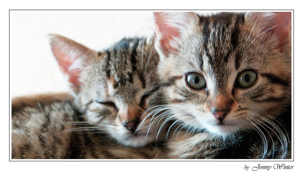 ... kätzchen kuscheln doch gern