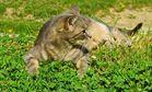 ...Kätzchen mit Gänseblümchen !!!...