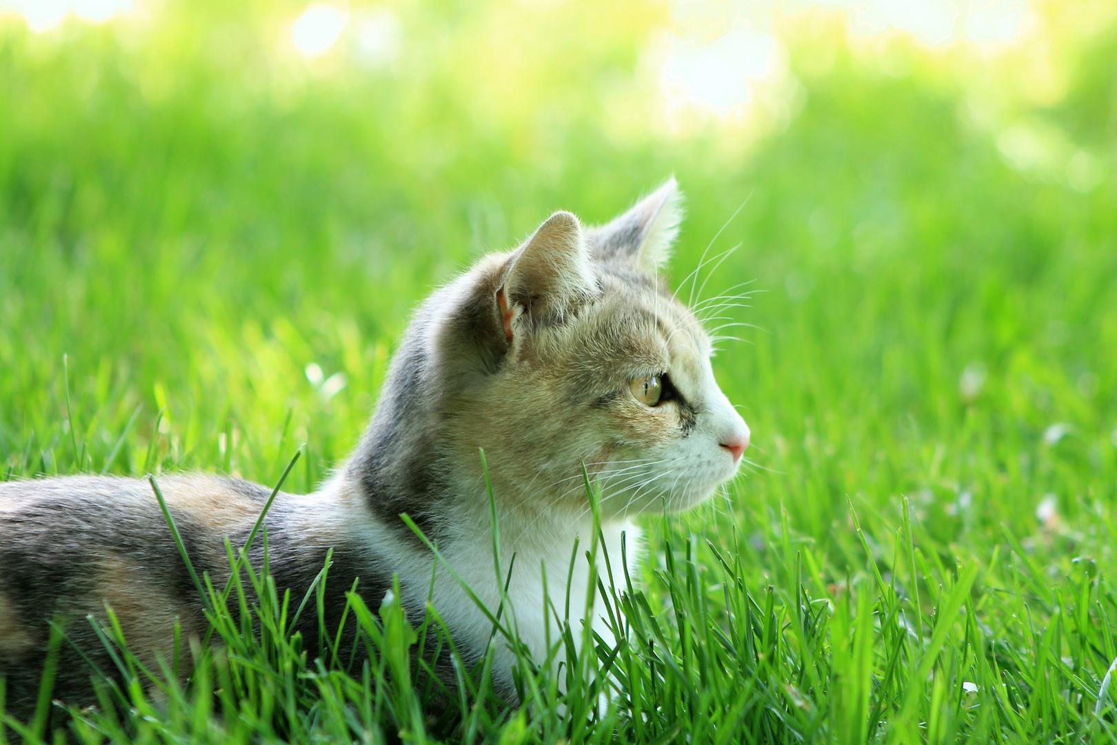 Kätzle im Gras