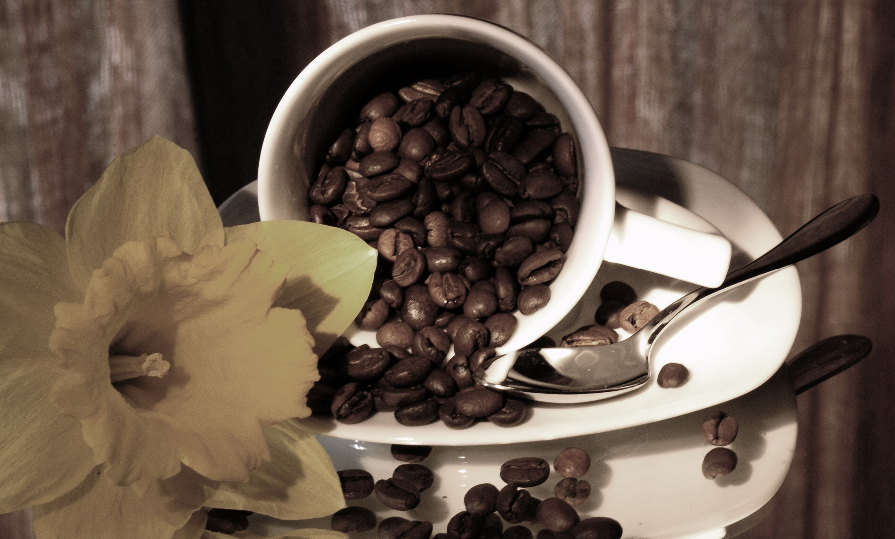 kaffebohnen in der tasse