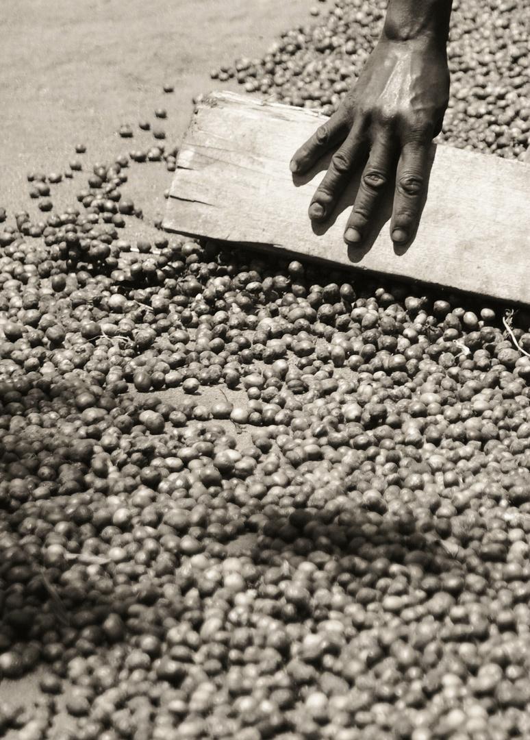 Kaffee geht durch viele Hände II