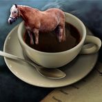 kaffeefahrt -pferd-