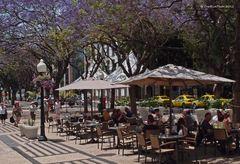 Kaffeezeit in Funchal an einer der schönen Alleen