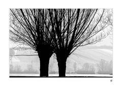 kahle Winterbäume