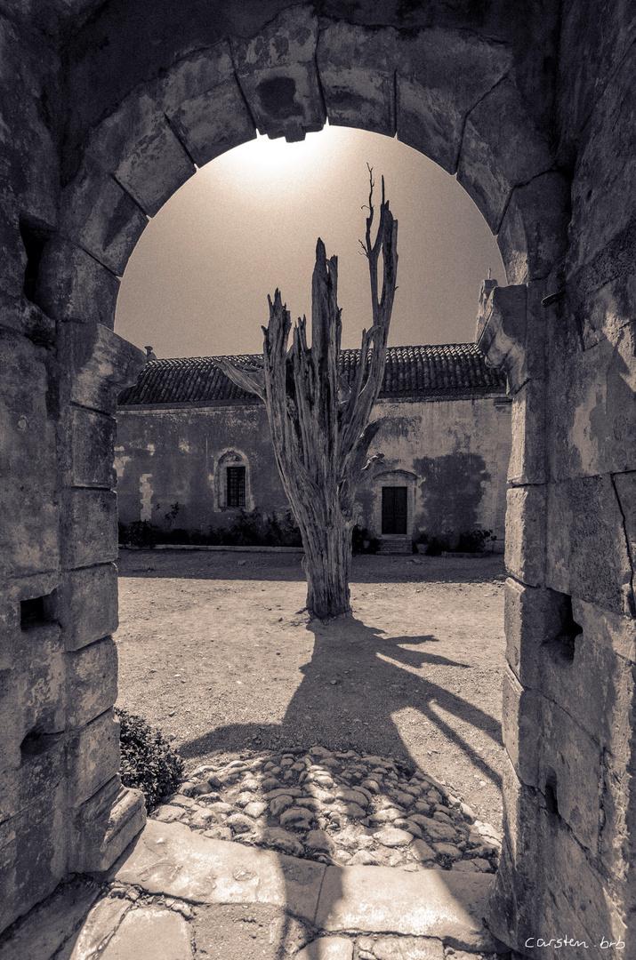 Kahle Zypresse im Kloster Arkadi