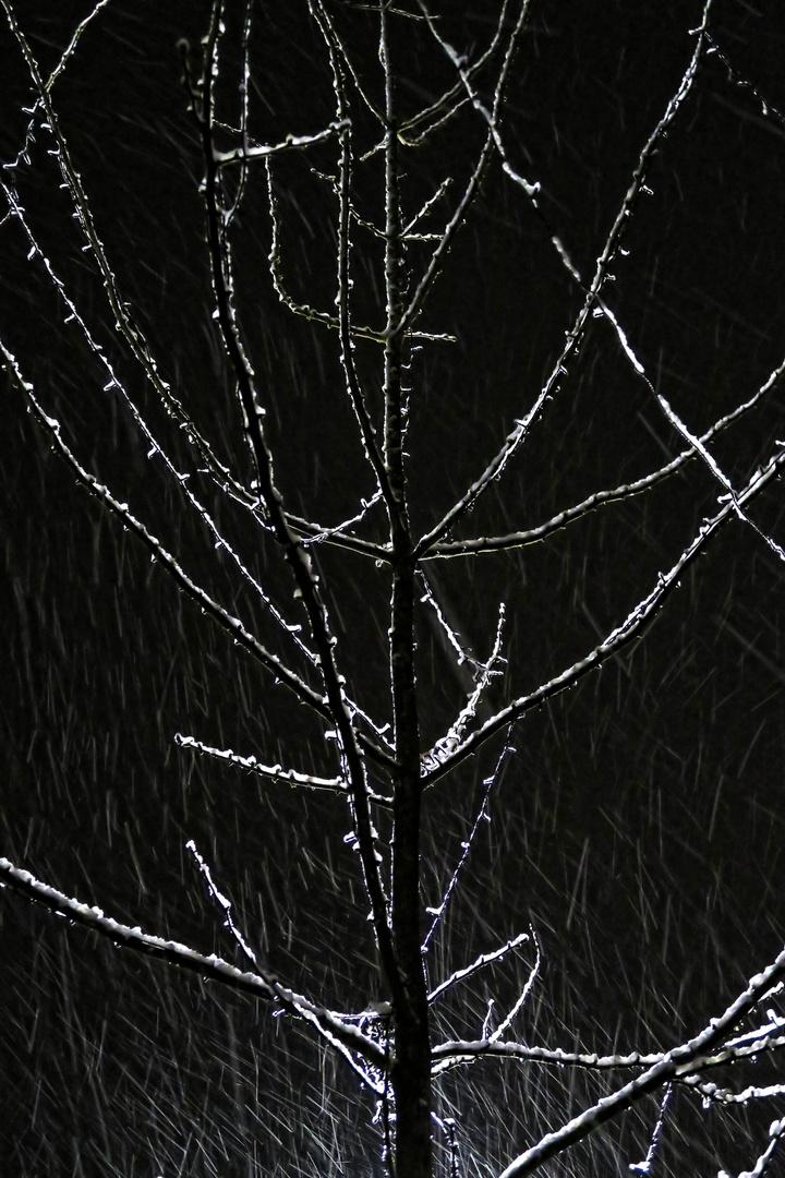 Kahler Baum im Schneegestöber