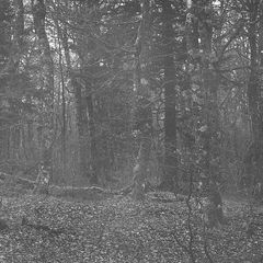 Kahler Wald am Tanet II