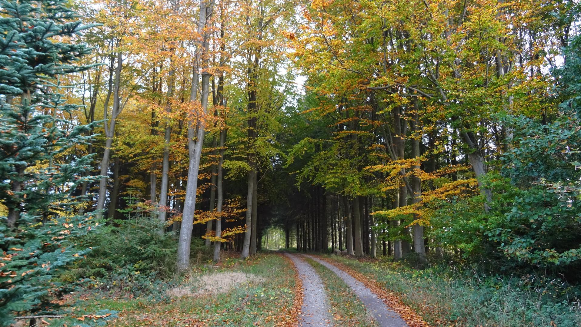 Kajbjerg skoven, Fyn, Denmark