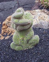 Kakteen-Frosch auf Lanzarote