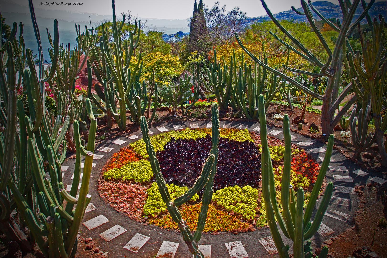 Kakteen Im Botanischen Garten In Funchal Madeira Foto Bild